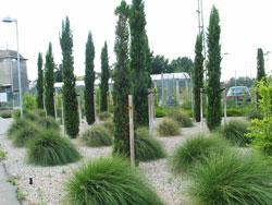 Gewerbliche Außenanlage Bepflanzung Gestaltung mediterran
