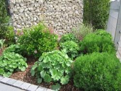 Bepflanzung Zaungabione Garten