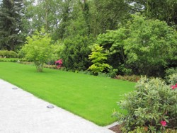 Garten Terrasse Bepflanzung Rasen