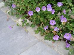 keramische Platten, Gartengestaltung Heddesheim, Form & Garten Fleckenstein GmbH