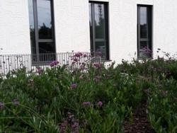 Außenanlage Gewerbeobjekt Bepflanzung Planung Grün