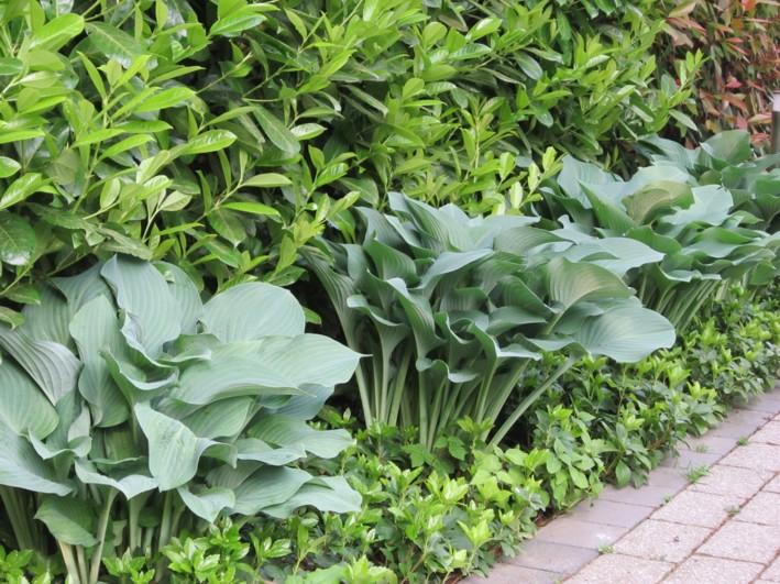 Bepflanzung architektonisch Garten Funkie Hosta